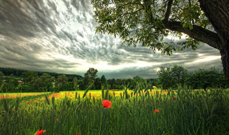 поле, красивое,