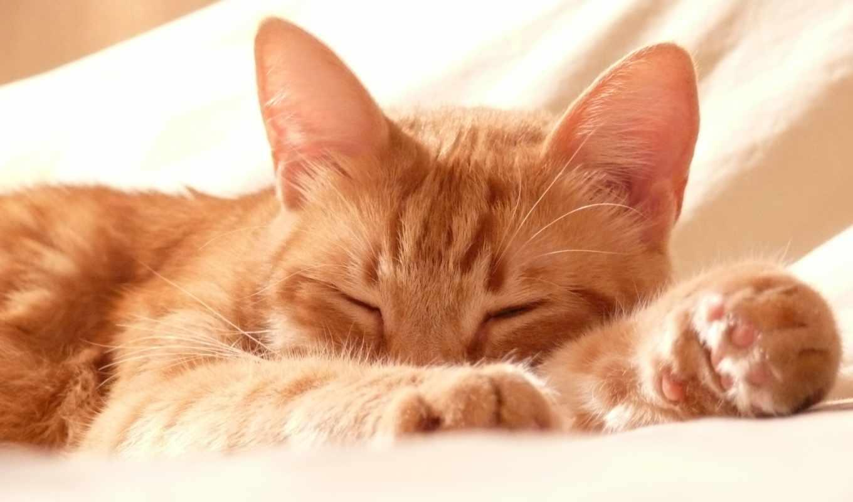 gato, gatos, resfriado, youtube, para, que, los, fiebre, ми,