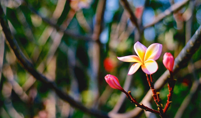 цветы, страница, можно, sun, love, тематика, картинкой,