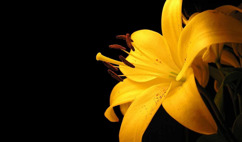 цветы, fone, синем,