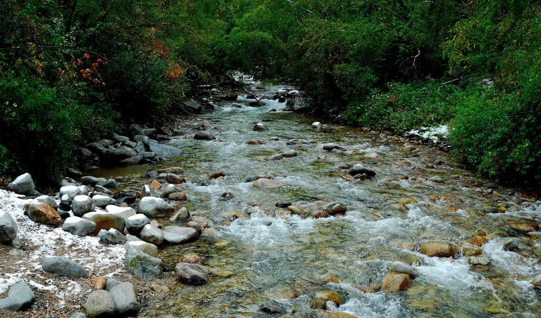 agua, природа, floresta, dimgray, darkgray, bosques, bosque, pantalla, los, papel,
