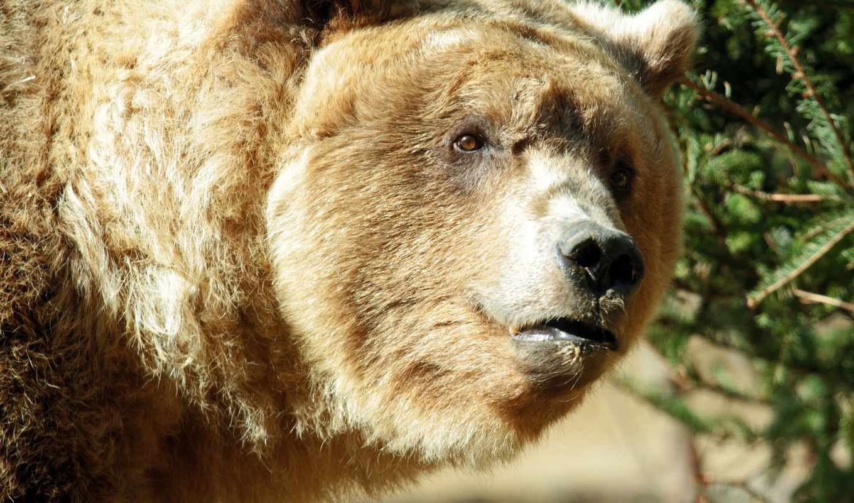 медведь, bilder, user, pin, admin, категория, added, comments,