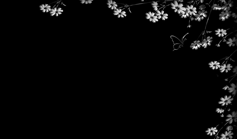 обои, черный, цветы, фон, бабочка, минимализм, фон