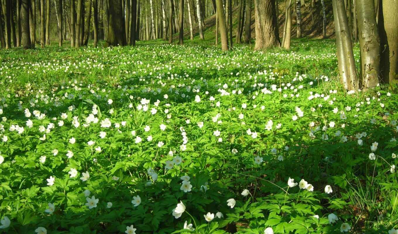 весна, марта, природа,