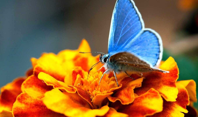бабочки, узоры, яркие, цветы, бабочка, просмотреть, яркий, полет,