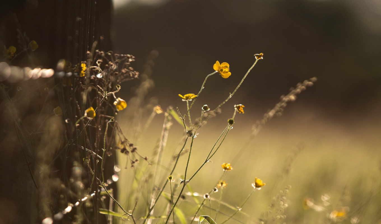 природа, разное, трава, summer, flowers, цветы,