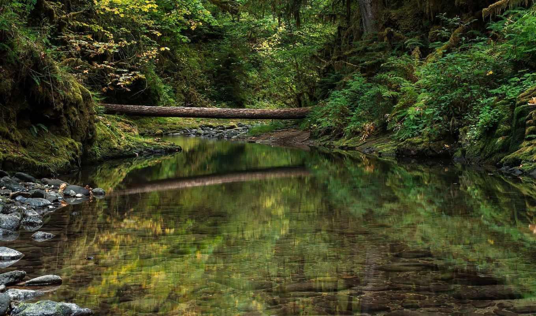природа, деревья, лес, река,