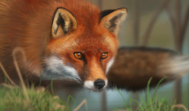фокс, рыжая, трава, морда, animal,