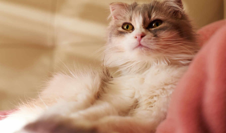 cute, cat, кот, фон, white,
