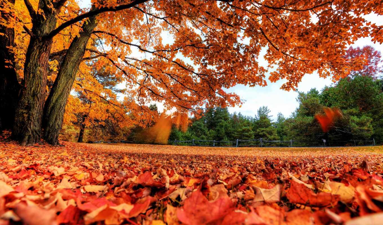 обои, осень, листья, красивые, деревья, обоев, раз