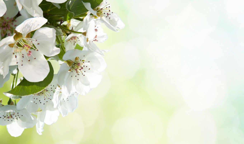 цветы, apple, макро, лепестки, цветение, природа, цветущие, everything, photoshop, весна, кустарники,