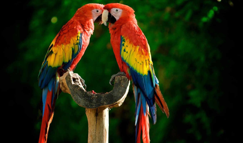 попугаи, яркие, разноцветные, жердочка,