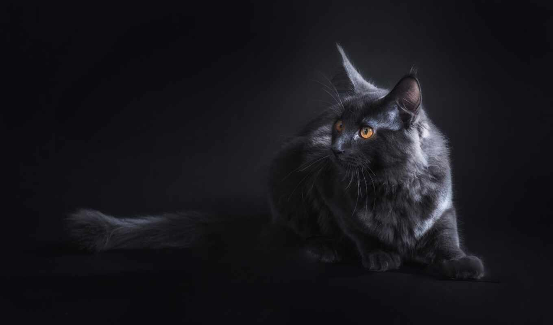 кот, animal, black, собака, взгляд, глаз