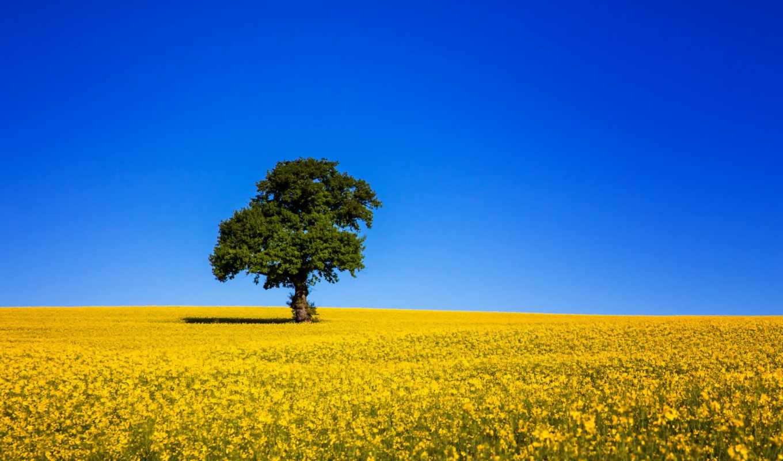 регистрации, без, цветы, поле, пейзажи, февр,