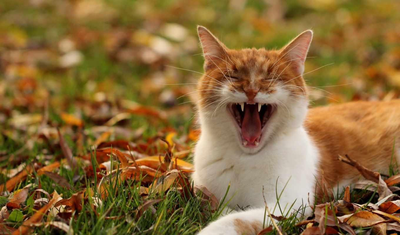 животные, листья, за, кошки, коты, можно,