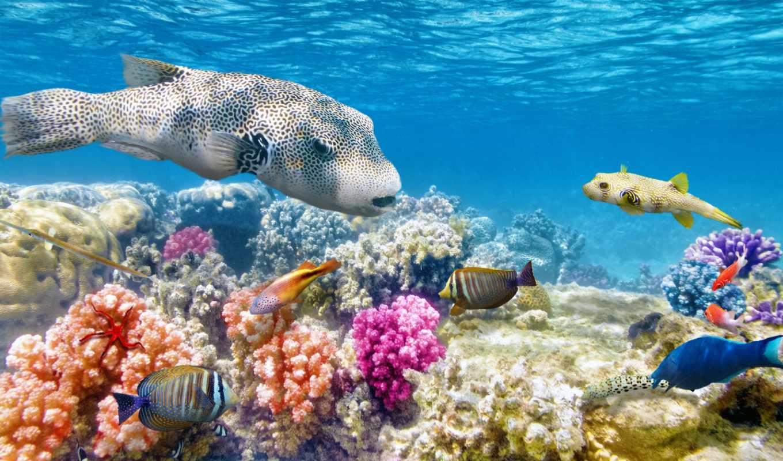 риф, coral, рыбки, обоях, underwater, world, отличного, tropical,