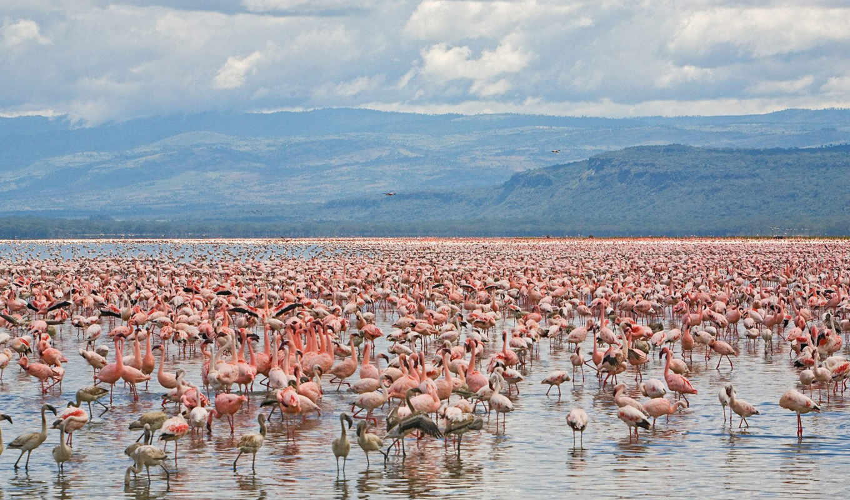 красивые, time, день, national, museum, zhivotnye, kenya, nairobi, nakuru, зверопост,