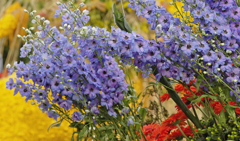 обои, цветы, букет, wallpapers, color, amazing, fu