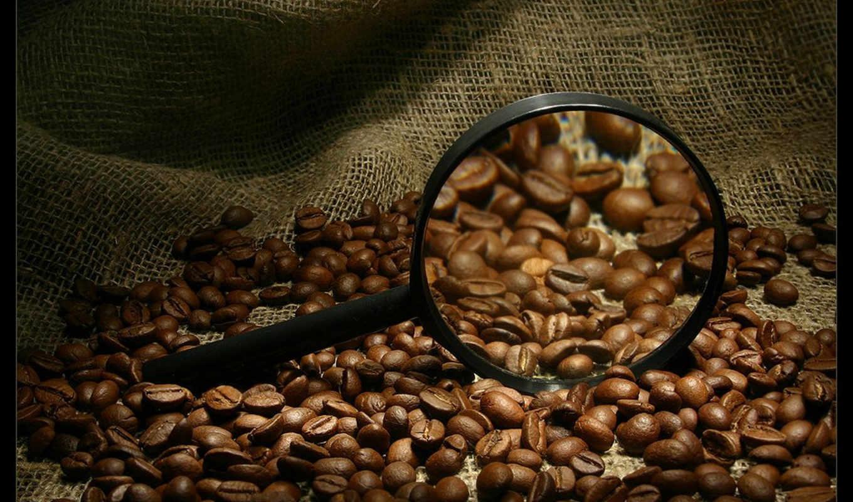 кофе, зернах, сорт, сборник, маракот, прекрасных, все, людей, кофеина, мы, kahve, грн,