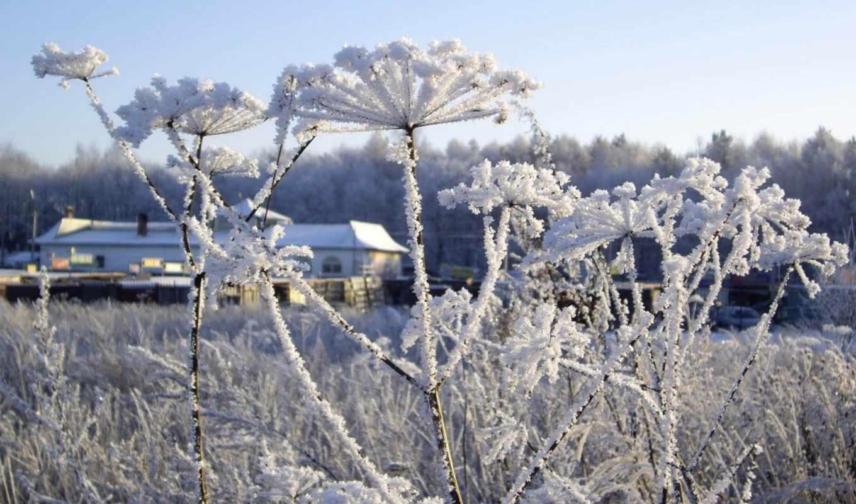 цветы, под, снегом, flowers, страница, фоны, свой, мои, бесшовные,