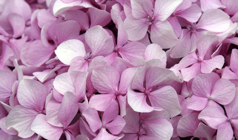 цветы, февр, розы, хип, дек,