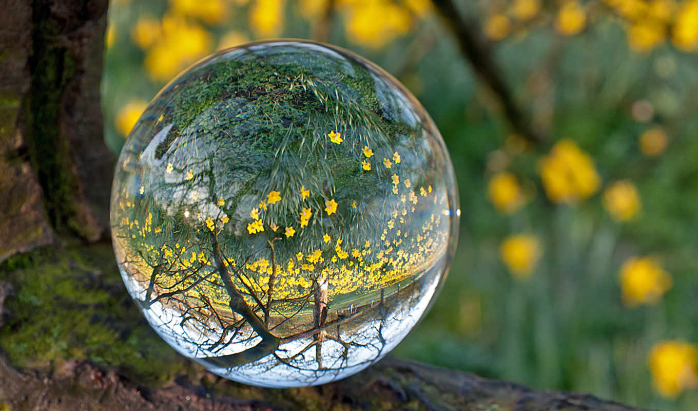 лес, water, цветы, картинка, мох, желтые, объектив, drop,