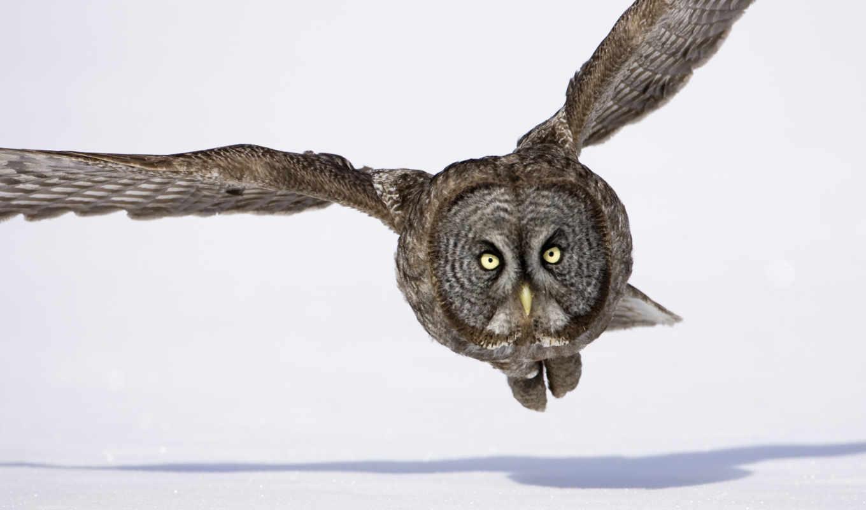 сова, wings, flying, снег, полет, птица, winter, birds,