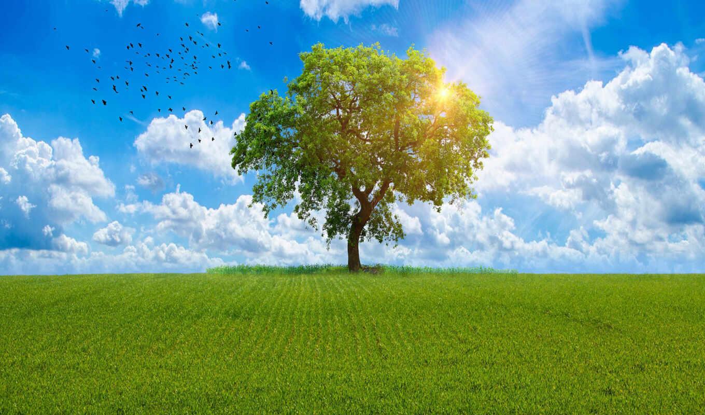 небо, ciel, трава, картинка, дерево, презентация, weed, domain, природа, стена