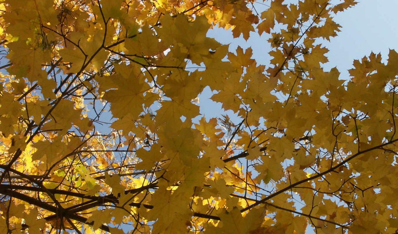 западный, днем, юго, температура, ветер, без, осадков, октября, украине, осень, метеопрог, градусов, северо,