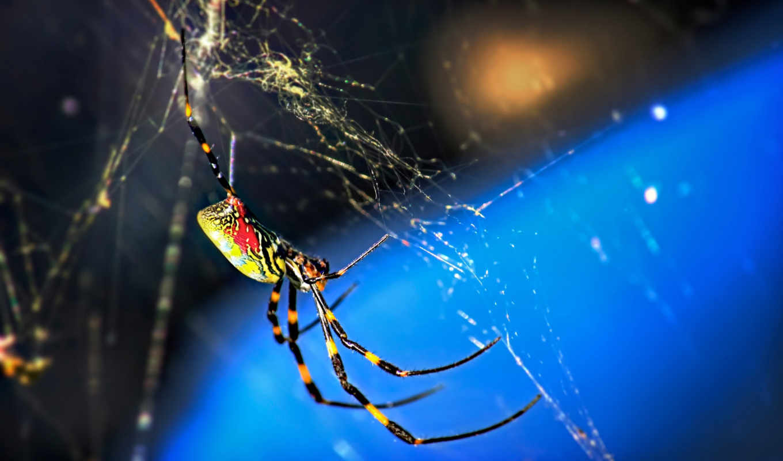 насекомые, предпросмотром, качественные, змеи, летучие, web, плетение,