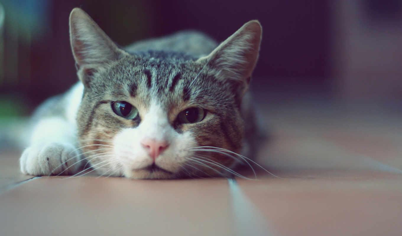 кот, котэ, базе, кис, качестве, высоком, няшный, морда, мяу,