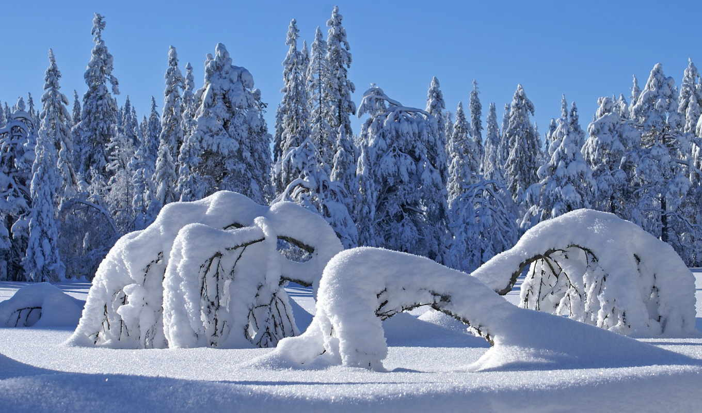 winter, природа, дек, лес,