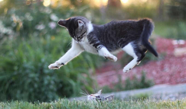 прыжок, funart, oir, prokot, кот