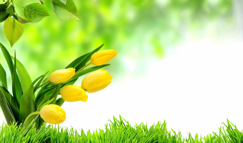тюльпаны, цветы, желтые, листья, трава, пасха, праздники, букеты,