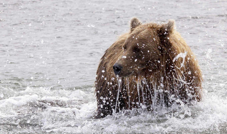 брызги, медведь,река,