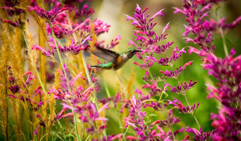 красивые, калибри, цветы, полет,