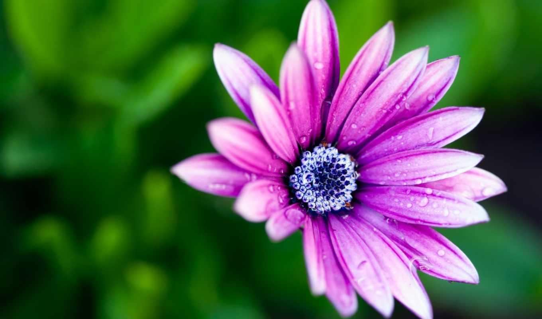 макро, цветы, лепестки, марта,