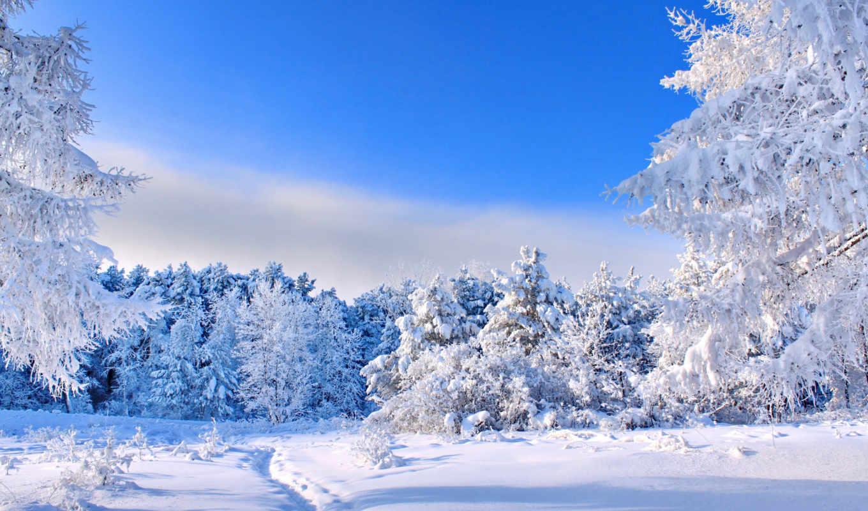 winter, широкоформатные, коллекция, красивые, лес, нояб,