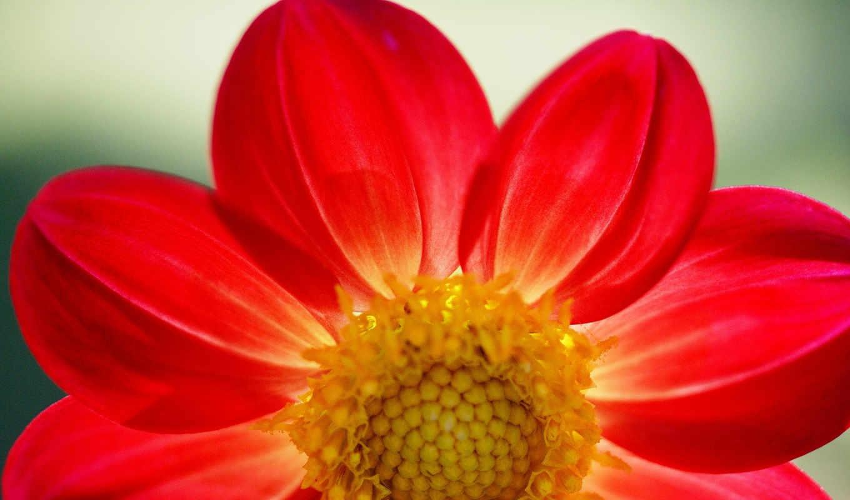 цветы, flowers, природа, природы, мужчина, удивительные, фоны, они, ромашки, имеют, форму,