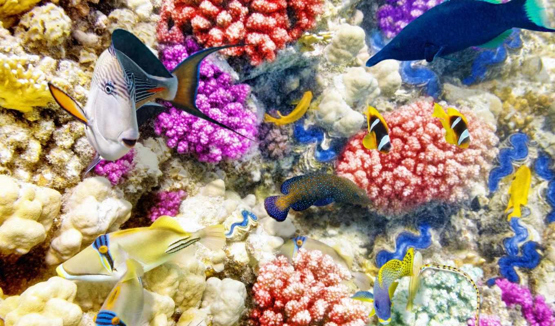 world, underwater, pisces, zhivotnye, кораллы, zoom, картинку,