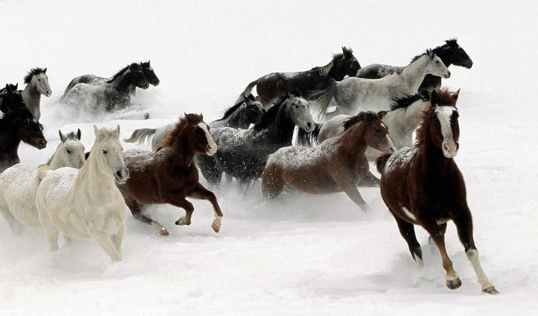 caballos, fondos, pinterest, pantalla, animales, fondo, caballo, escritorio, табун, лошади,