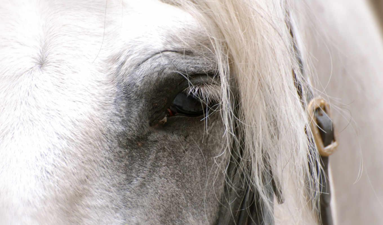 лошадь, facebook, timeline, cover, глаз, white, covers, desktop,