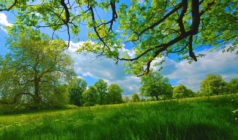 дерево, природа, фото, summer, весна, трава, луг, поле, картинка, pattern, stokovyi