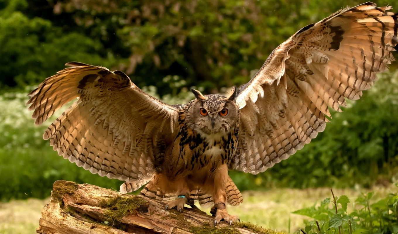 birds, bird, совы, животные, выпуски, gb, пестрый,