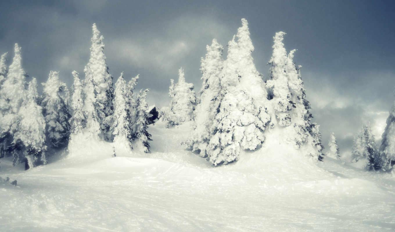 природа, winter, снег, деревья,