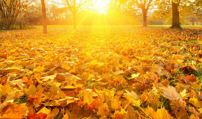 osen, листопад, разделе, желтизна,