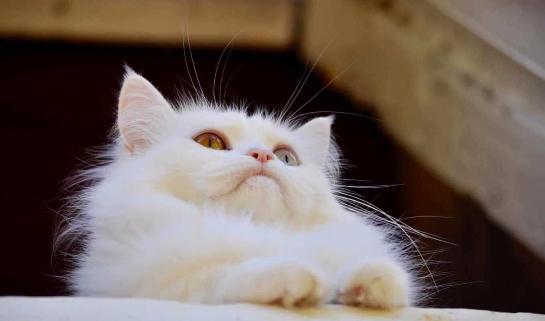 кот, зелёный, white, глаз, взгляд