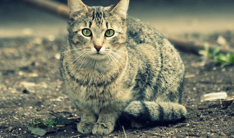 взгляд, изображение, глаза,, животные, кошки, cats,