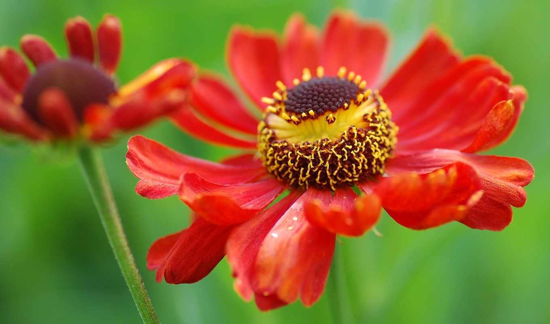 cvety, сборнике,