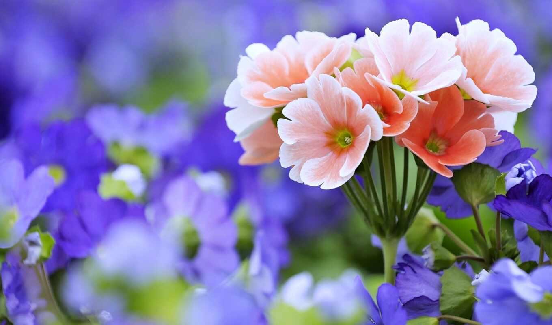 цветы, природа, полевые, часть,